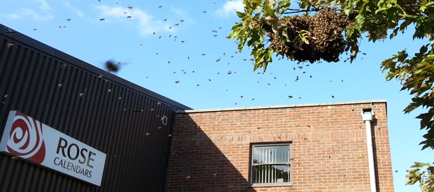 Nest of Bees