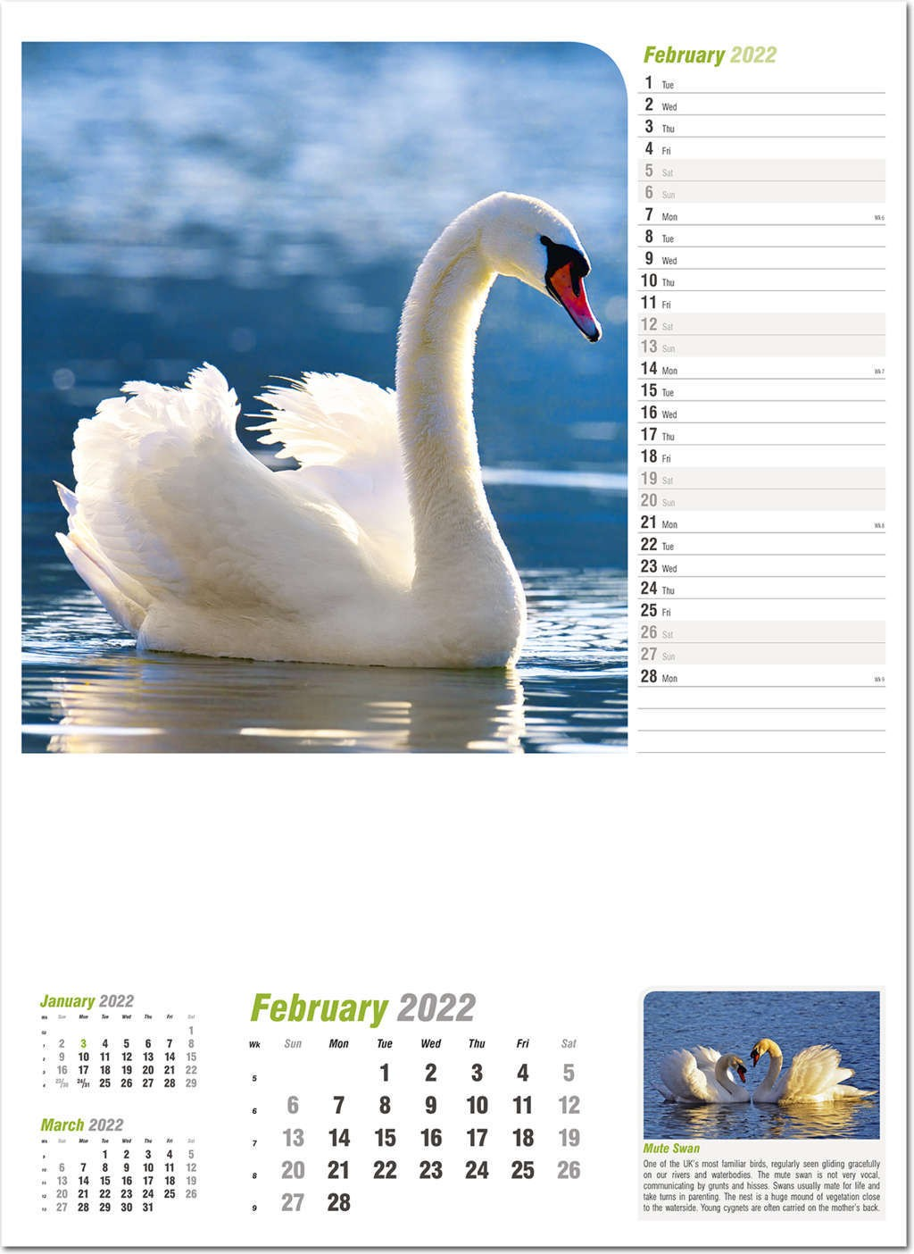 Wildlife in Britain Wall Calendar